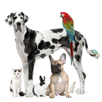 Vetmobile Housecall Service welcomes all